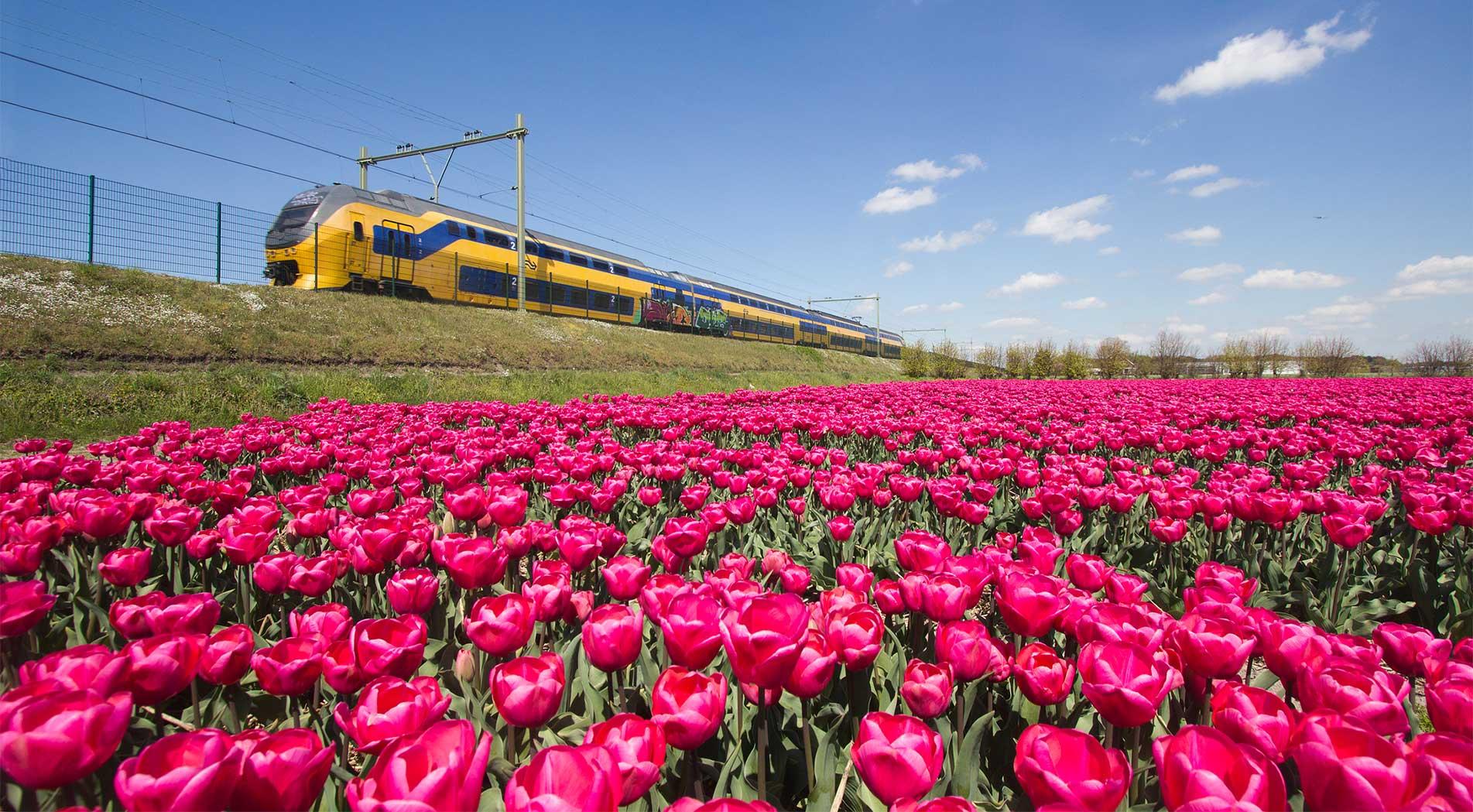 NS Rail - Holanda