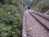 Rede ferroviária é má mas a IP garante a segurança