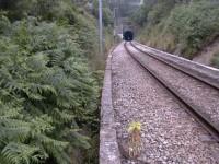 IP reabilita 7 km da Linha da Beira Alta