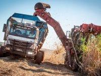 Mercedes semi-autónomos colhem cana-de-açúcar