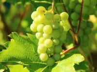 AEP apoia exportação de Vinho Verde no Brasil