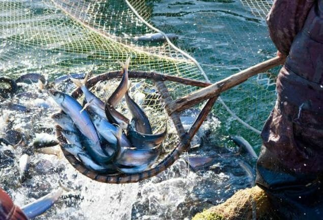 Pesca garantiu dois terços da facturação do sector do mar